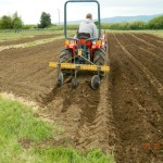 Preparing rows in Thorp for spring planting