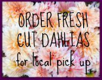 Order Fresh Cut Dahlias