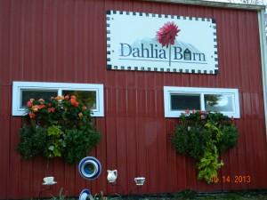 The Dahlia Barn 2013