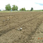 Our Thorp Wa. production garden freshly planted May 2013