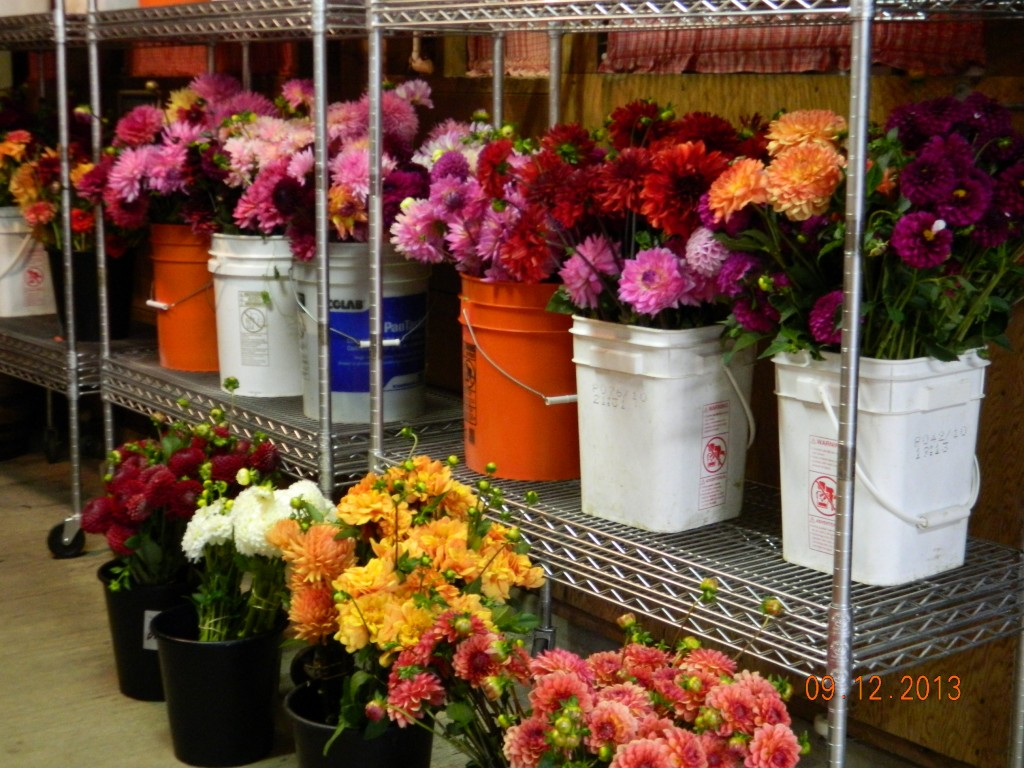 Bulk Cut Flower Orders For Local Weddings Parties Events