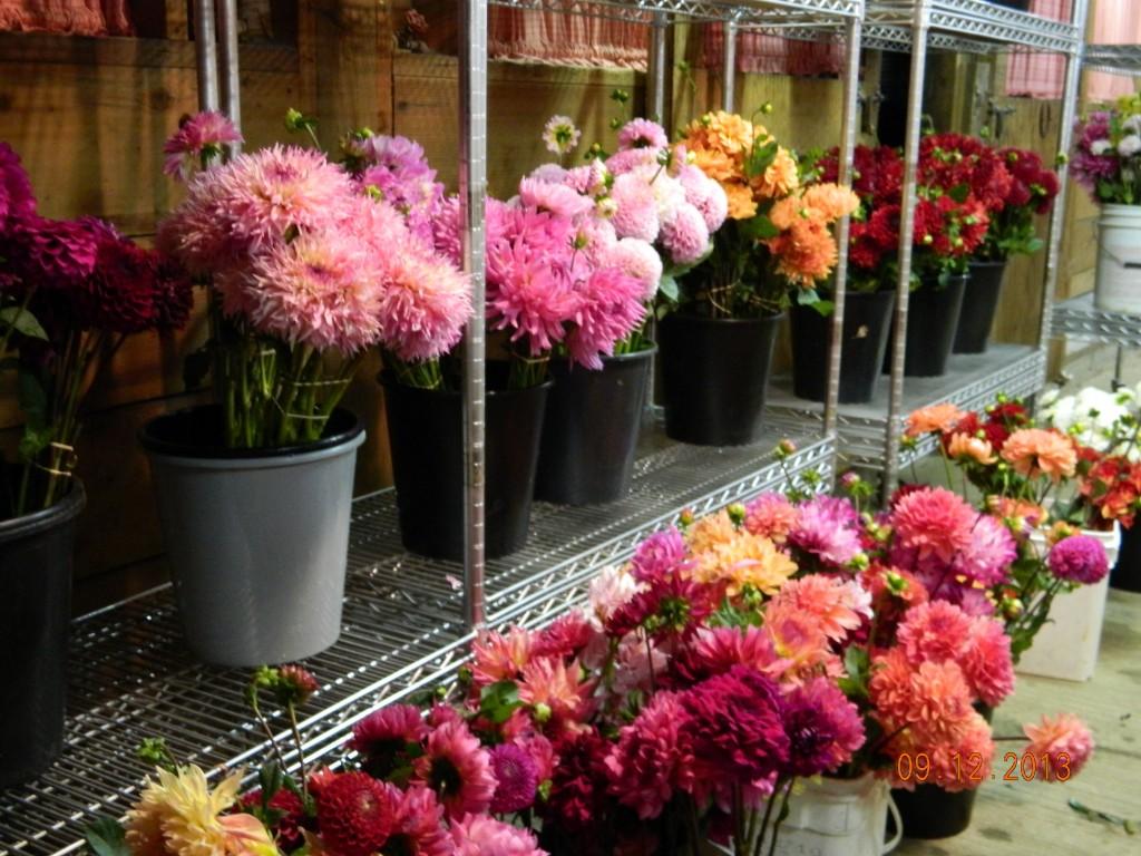 Bulk cut flower orders for local weddings parties events buckets of cut flowers izmirmasajfo