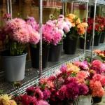Buckets of cut flowers