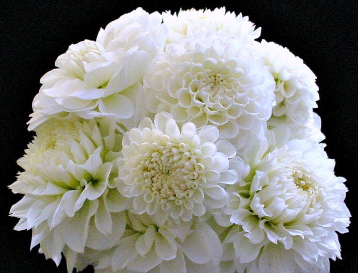 Whites - 10 stems