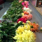 Fresh cut dahlias