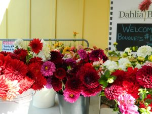 Buckets of Dahlias