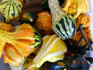 Gourds for fall decor