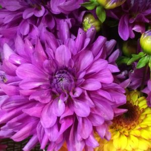 Bluetiful_Cut_Flower_Dahlia_Barn (1)